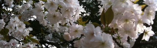 唐津の海と桜