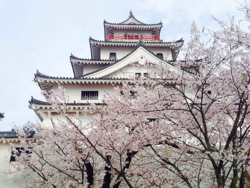 今年のお花見は城と城跡で